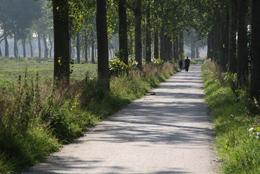 28587 komex halverharding in een bos 1