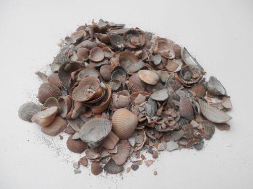 28588 gebroken schelpen bij brabant trade 1